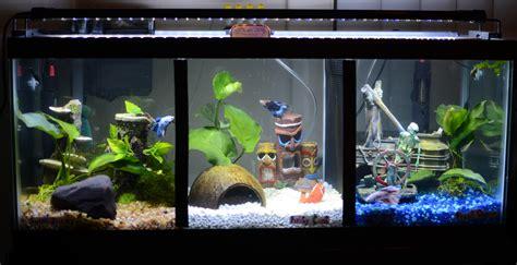 betta tank fts of a 20 long betta tank and more aquariums