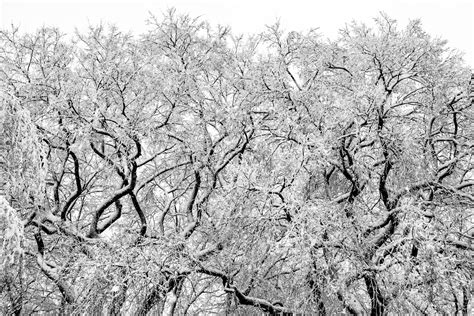 Winter Trees Chris Leary Photography Winter Wedding