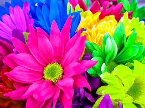 Rainbow Flowers 17370 1024x768 px ~ HDWallSource.com