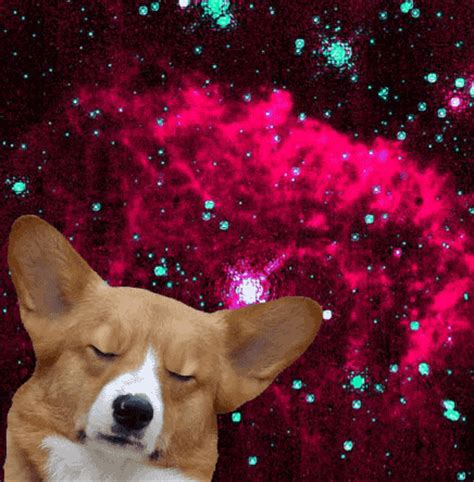 Dogs In Space dogs in space gifs wifflegif
