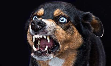 rabid puppies rabid kills four year boy in western region myjoyonline