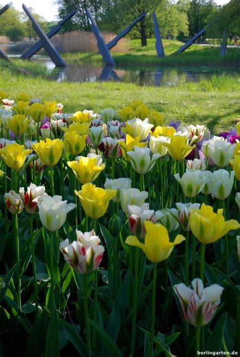 britzer garten de tulipan im britzer garten berlingarten