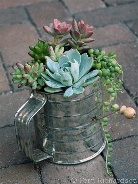 succulent garden containers best 25 succulent containers ideas on