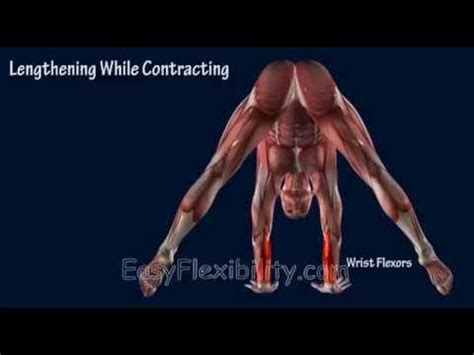 tutorial handstand yoga how to press handstand tutorial progression muscle
