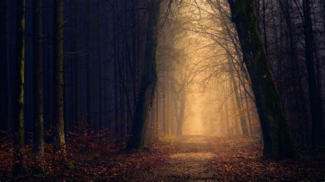 autumn forest  wallpapers hd wallpapers id