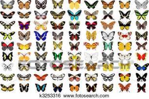clipart farfalla clip farfalla k3253316 cerca clipart poster