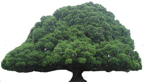 tree of tree clipart
