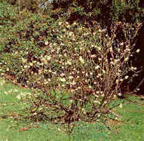 cespugli da giardino fioriti alberi piccoli e cespugli da fiore verde e paesaggio
