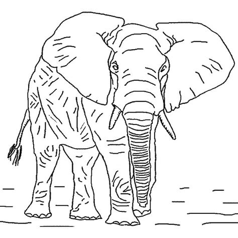 elephants coloring pages african elephant coloring page
