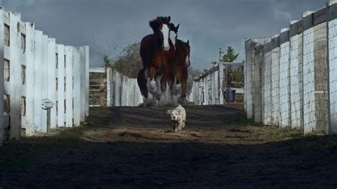 budweiser puppy commercial 2013 budweiser lost is found the inspiration room