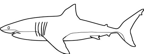 coloring pages shark coloring pages   printable