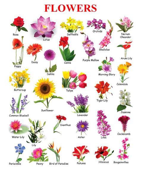 flowers  picture  kids poisk  google flower