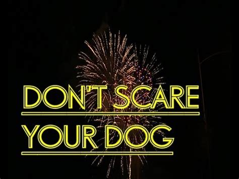 how to calm a during fireworks how to calm a during fireworks funnydog tv
