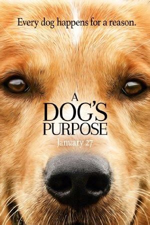a s purpose rating a s purpose 2017 available on netflix netflixreleases