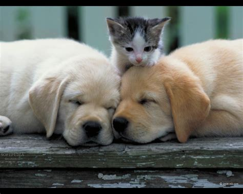 adorable puppies and kittens adorable kitten and sleeping puppies