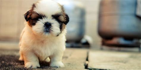 show me pictures of puppies show me pictures of really puppies 4k wallpapers