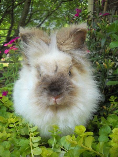 rabbit house society 25 best ideas about house rabbit society on pinterest pet bunny rabbits bunny care