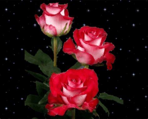 imagenes rosas con movimiento y brillo lindas rosas con brillo y movimiento imagenes de amor gratis