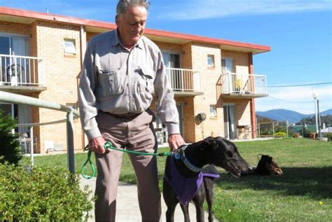 retired greyhounds find new lease on at aged care
