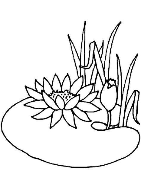 coloring page water lily water lily coloring pages download and print water lily