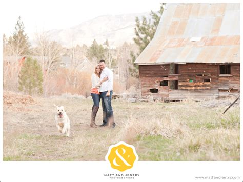 golden retriever breeders reno nv the golden retriever featured is chagne breeds picture