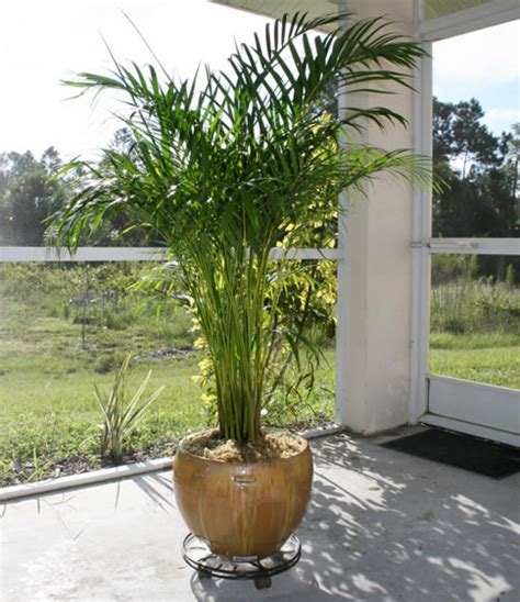 in door plant tropical house plants for your garden room interior design inspiration
