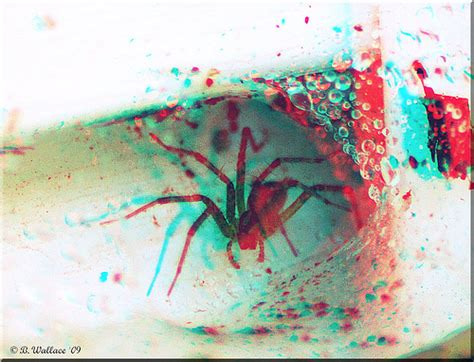 imagenes en 3d con gafas 3 000 fotos para ver con lentes 3d rojo y azul