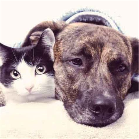 liver problems in dogs cat and liver shunt treatment and prevention petcarerx