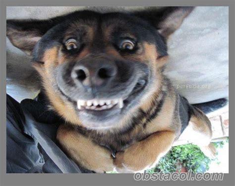 Dog Smiling Meme - upside down smiling dog