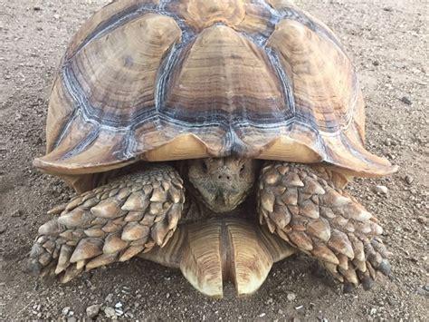 pet tortoise reunited  family  walking