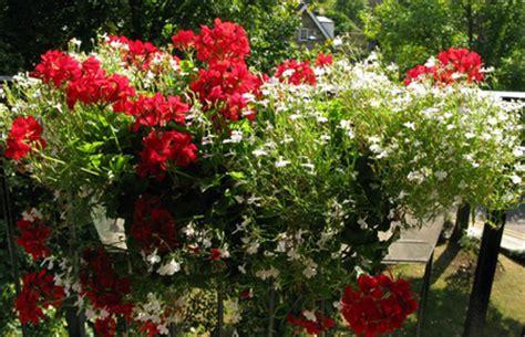 piante da davanzale fioriera per davanzale pollicegreen