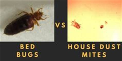 bed bugs cats the biology of house dust mites and dust mite allergies