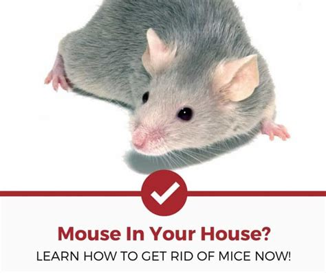 how to get rid of mice in kitchen cabinets how to get rid of mice natural non natural methods