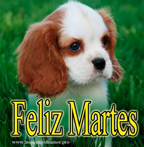 Imagenes Se Feliz Martes Con Perros | 11 im 225 genes para d 237 as de la semana con perritos tiernos