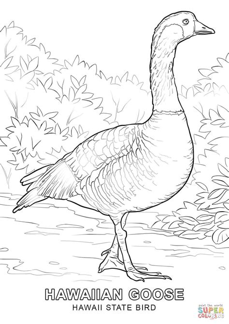 coloring page hawaii hawaii state bird coloring page free printable coloring