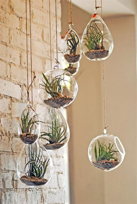 la plante tillandsia comme decoration dinterieur