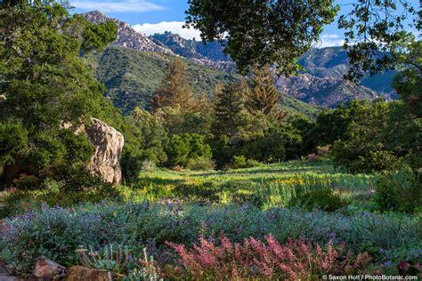 Sb Botanic Garden Santa Barbara Botanic Garden Photobotanic