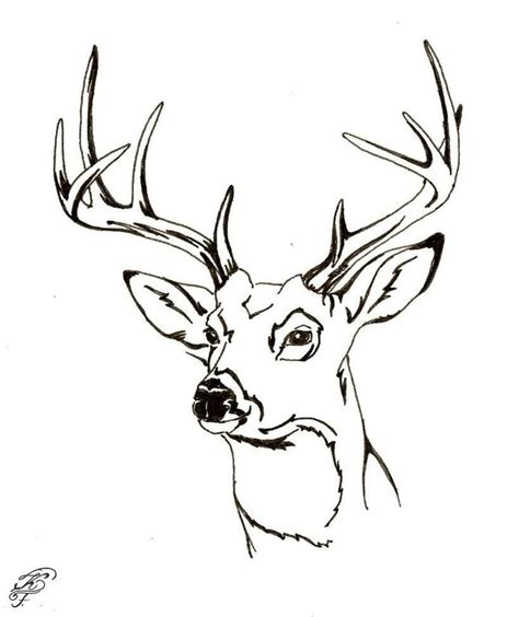 coloring pages of deer bucks buck and doe coloring pages coloring home