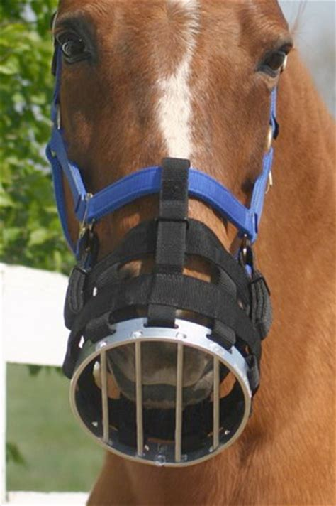 Cribbing Muzzles For Horses cribbing its not just a nuisance