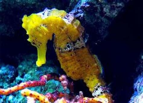 Permalink to Home Aquariums For Sale – Acrylic Fish Tanks Photo Gallery, Midwest Custom Aquarium