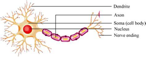 nervous tissue labeled diagram what is nervous tissue explain meritnation