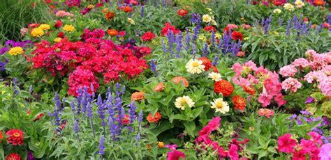 Gardenia Annual Or Perennial Annuals Garland Nursery