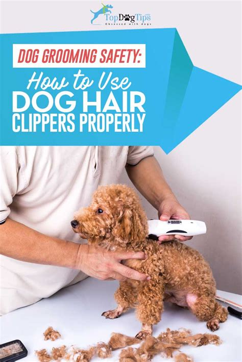 how to get your dog to use the bathroom outside how to use dog clippers to trim or cut dog s hair a video
