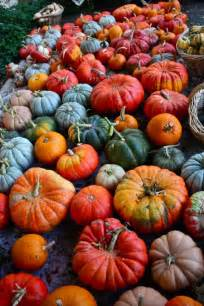 pumpkin colors heirloom pumpkins gourds and pumpkins