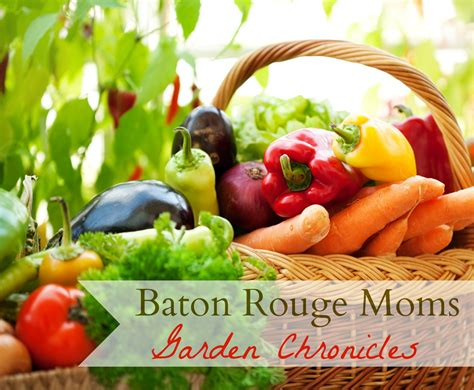 louisiana gardening Archives   Baton Rouge Moms