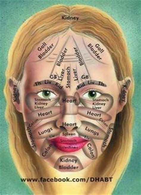 face mapping on pinterest estheticians facial massage 1000 images about lymphdrainage on pinterest lymphatic