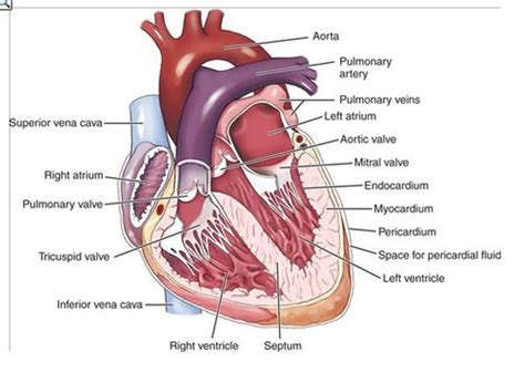 chapter 6 weight management quizlet organs quizlet image collections how to guide