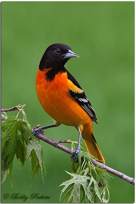 backyard bird watching 25 b 228 sta birds photos id 233 erna p 229 pinterest f 229 glar