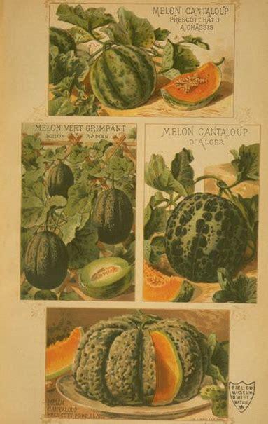 cuisine du marché cavaillon la cuisine fran 199 aise d antan les melons de cavaillon d