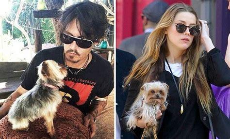 Casa Di Johnny Depp by 24ze Australia La Moglie Di Johnny Depp Evita Il